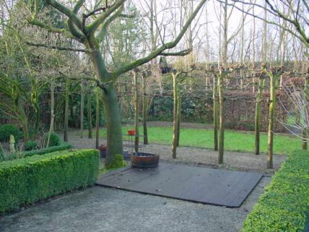 Huis gekocht welke boom in de tuin for Huis in de tuin