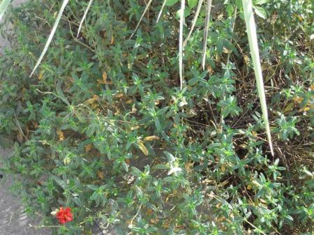 Planten En Bomen : Verschillende planten en bomen groeninfo.com tuinforum