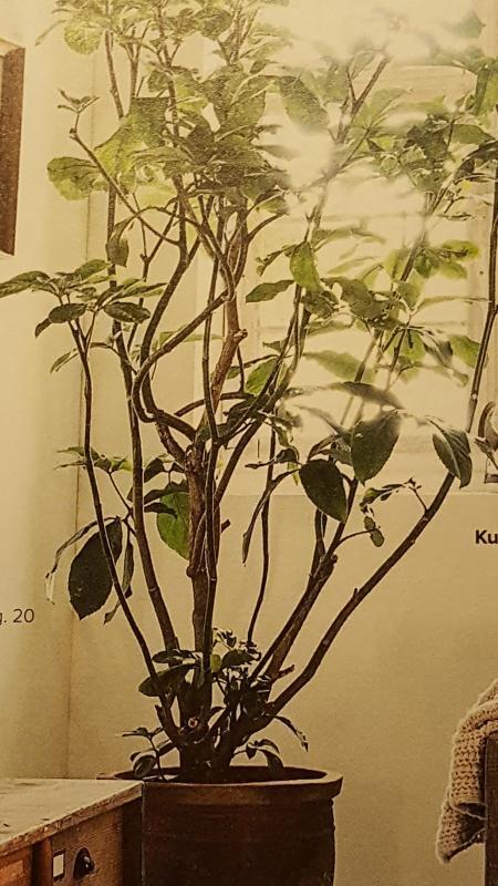 Wie Weet Wie Weet Zie Je De Prins Als Hij De Heuvel Op: Wie Weet De Naam Van Deze Plant?