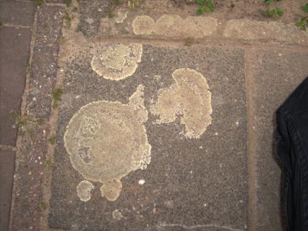 korstmos verwijderen tegels