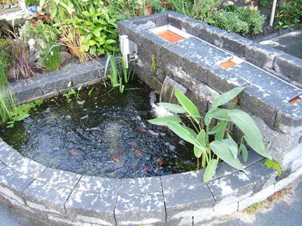 Wonderlijk Probleem combinatie vijver - plantenbak | Groeninfo.com tuinforum TR-34