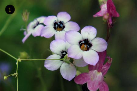 namen van wilde bloemen uit zaadmengsel | groeninfo tuinforum
