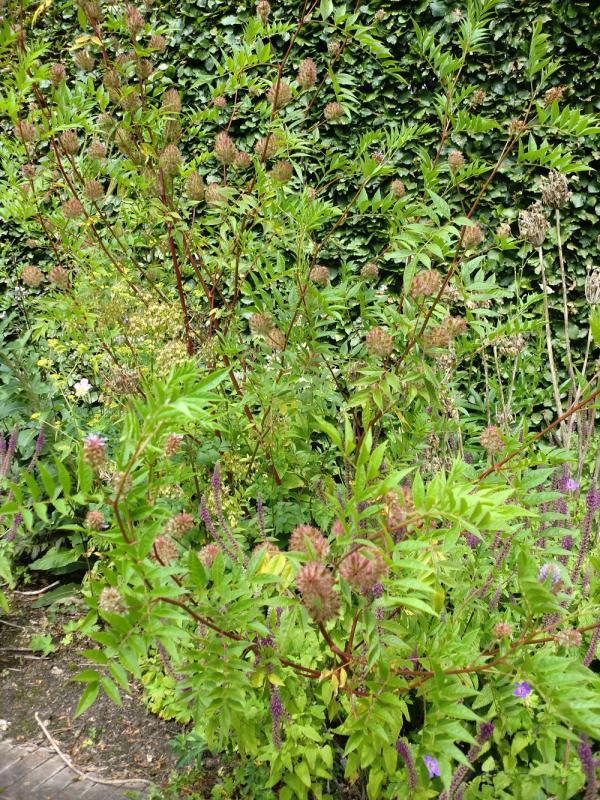 Nog een bijzonder half heestertje tuinforum - Bijzonder tuinfoto ...