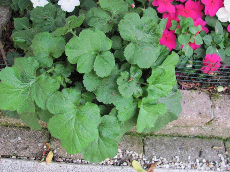 Welke Plant Is Dit.Welke Plant Is Dit Groeninfo Com Tuinforum