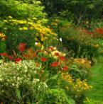 De Groene Route: Kleurig feest in de tuin