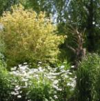 De Groene Route: Nieuwe inspiratie voor je tuin
