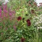 Toptuinen in geuren en kleuren