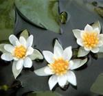 Bewatering planten via minivijver