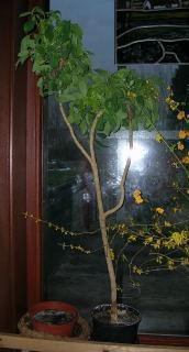 welke planten?