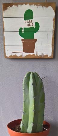 Herken mijn Cactus