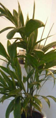 hoe moet ik deze plant verzorgen aub