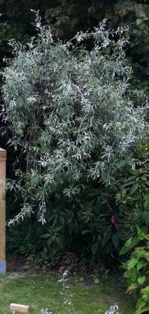 Wat voor boom is dit?