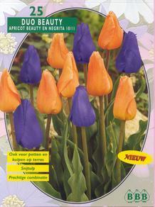 Blauwe tulpen - bestaan ze wel?