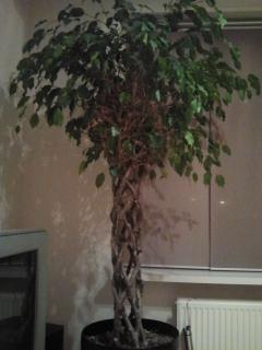 Wat voor een plant?