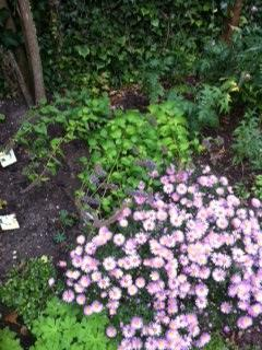 borderplante groeien naar voren