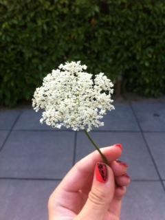 Naam van deze bloem?