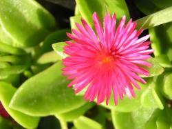 Onbekend plantje (voor mij) uit Spanje