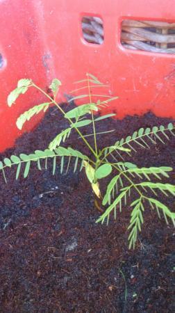 identificatie stekjes tropische bomen/planten