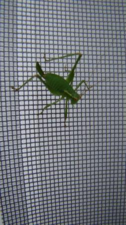 Welk insect?