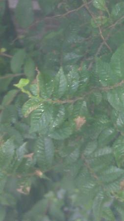 welke boom of struik is dit