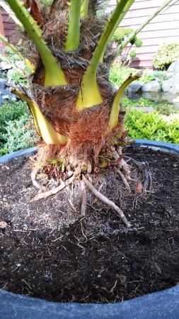 Welke palmsoort is dit?