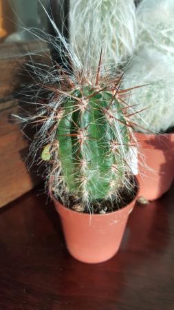 Welke soorten cactussen zijn dit ?
