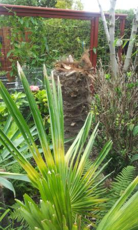 Palmen afgezaagd, slecht resultaat...