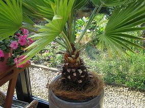 nogmaals welke palm