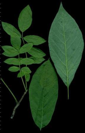 Welke tropische plant is dit?