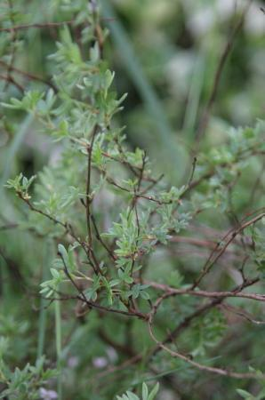 Tuinplantenquiz