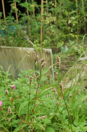 identificatie vantamelijk veel planten. aub?
