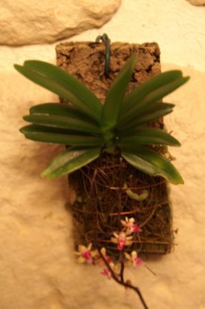 Orchid foto's Antoon.