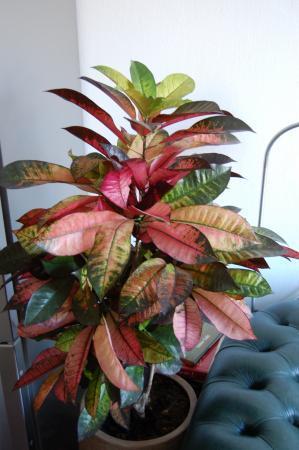 Hoe behandel ik deze plant?