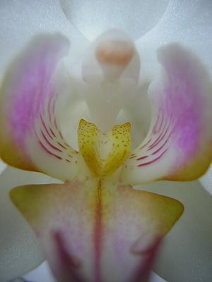 Foto van orchidee