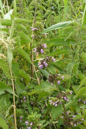 Planten op de Brabantse Wal 2