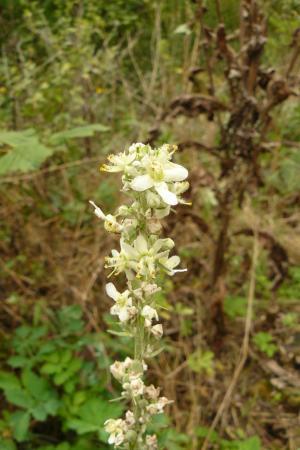 Identificatie wilde planten