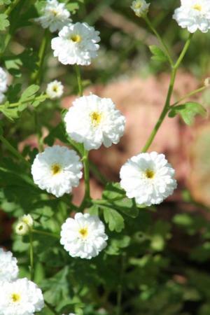 Welke bloemen zijn dit? Deel 8