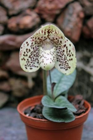 Zomaar wat foto's van minder bekende orchideeen