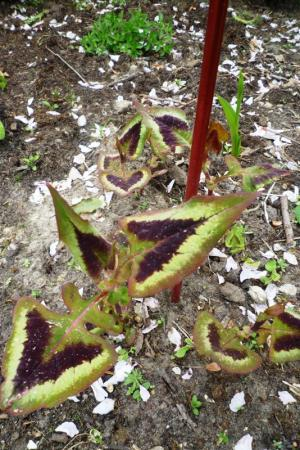 Kent iemand deze planten?