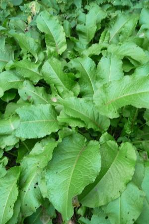 graag uw mening en naam van deze 3 planten
