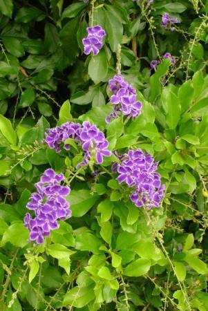 Bloemen van Australië