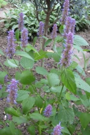 onbekende plant met frisgroen blad