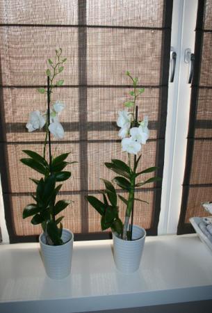 Vraagje over m'n gekochte orchidee.