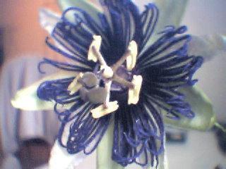 welke soorten passiflora's?