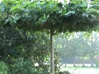 plantgat dakplataan