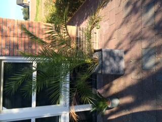 palm gaat kapot