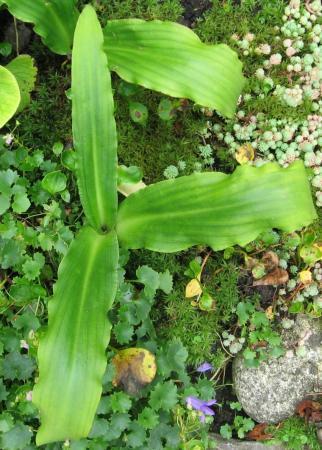 onbekende planten