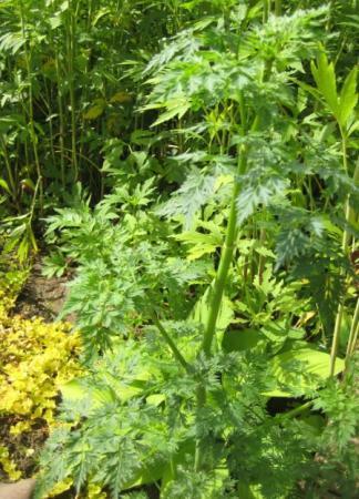 Planten zonder naam