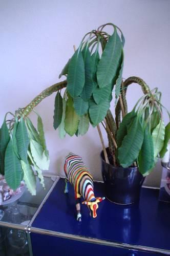 help, plant hangt slap!