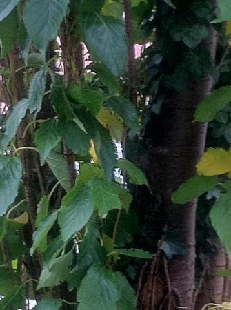 Welke boom is dit?